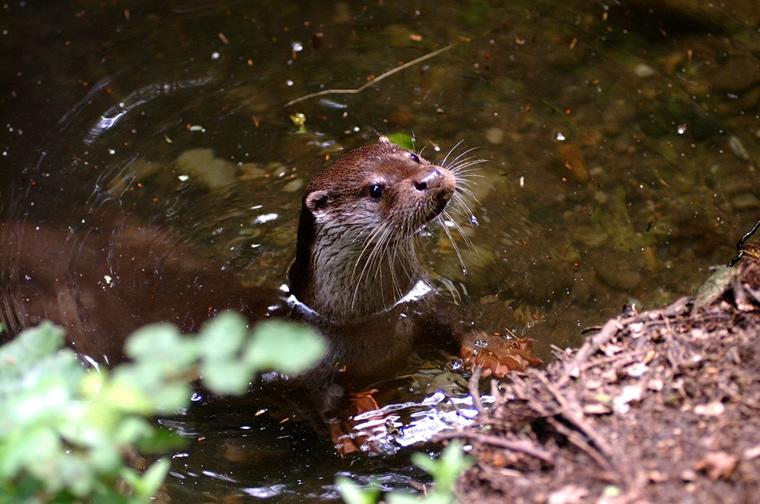 Fauna nel Parco del Ticino