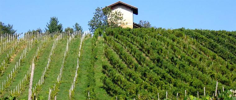 I vini dell'altro Piemonte