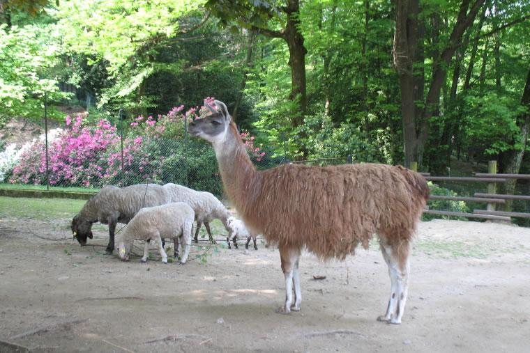 Parco Zoologico Villa Pallavicino - Stresa