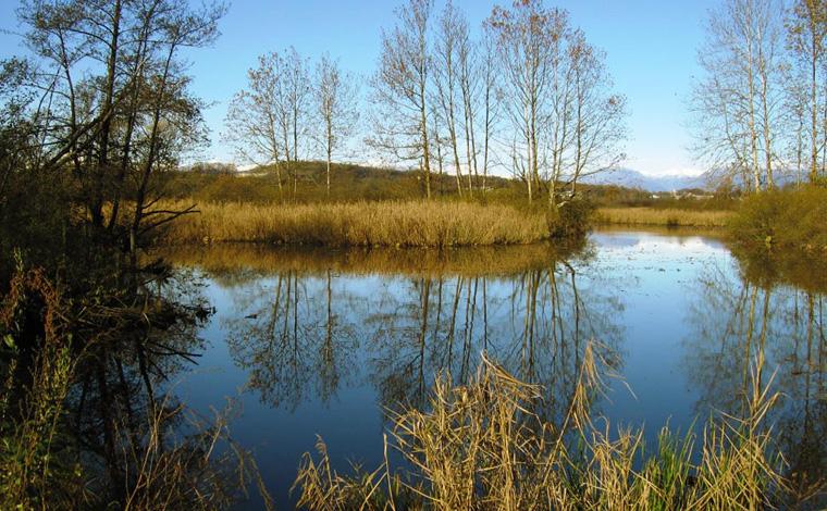 Riserva Naturale Palude Brabbia vicino al Lago Maggiore