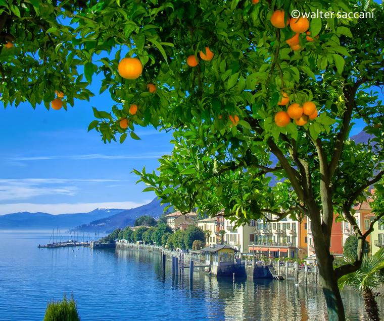 Agrumi Cannero Riviera