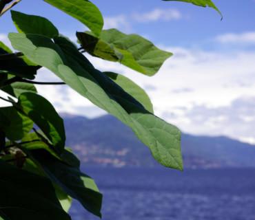 Lesa Lago Maggiore