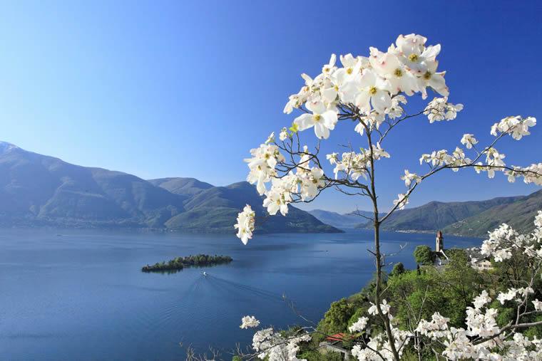 Primavera Lago Maggiore